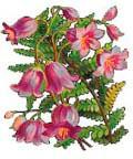 Цветочный гороскоп - Колокольчик (1 июня - 11 июня)