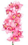 Цветочный гороскоп - Орхидея (3 ноября - 12 ноября)